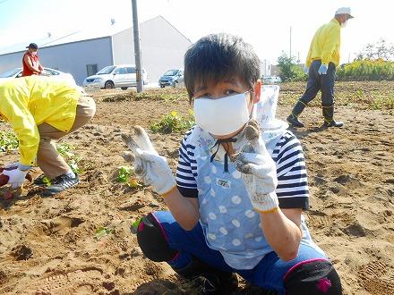 2020アカシヤの里芋掘り体験004